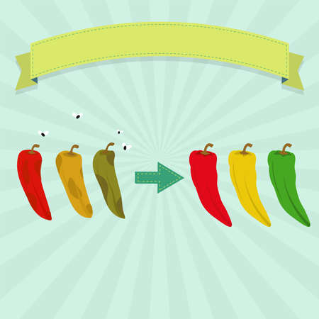 Rotten chilli pepper with flies and fresh chilli pepper. Green, red and yellow peppers. Blank ribbon for insert text.
