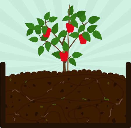 Paprika pflanzen. Kompostierungsprozess mit organischem Material, Mikroorganismen und Regenwürmern. Abgefallene Blätter auf dem Boden.