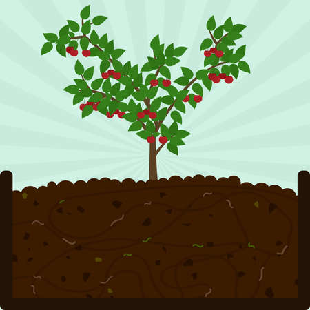 Planting cherry fruit. Composting process with organic matter, microorganisms and earthworms. Fallen leaves on the ground. Illustration