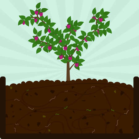 Planting raspberry fruit tree. Composting process with organic matter, microorganisms and earthworms. Fallen leaves on the ground. Ilustração