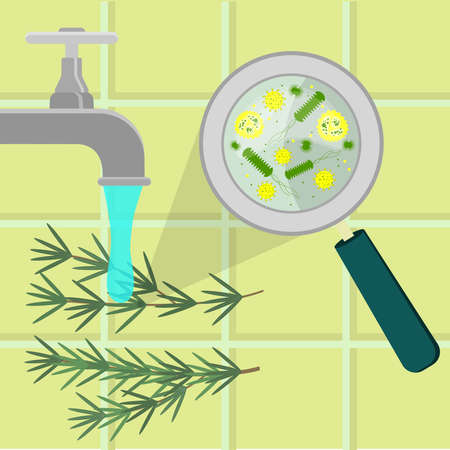 Contaminated rosemary branch being sanitized, cleaned and washed in a kitchen. Microorganisms, virus and bacteria enlarged by a magnifying glass. Tiles in the background.
