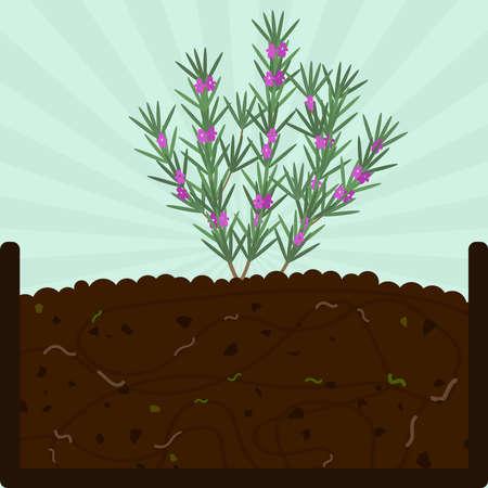 Plantación de romero con flores. Proceso de compostaje con materia orgánica, microorganismos y lombrices. Hojas caídas en el suelo.