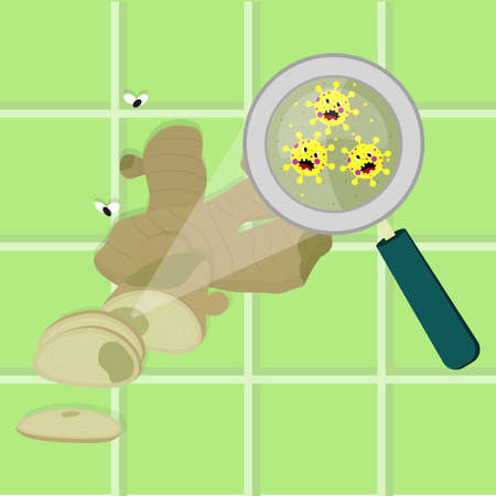 Sliced ginger bulb contaminated with cartoon microbes. Microorganisms, virus and bacteria in the vegetable enlarged by a magnifying glass. Angry microbes cartoon.