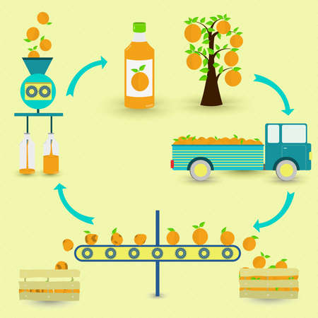 Orange juice production steps. Orange tree, harvest, transport, separation of healthy and rotten oranges, processed in factory and botted. In a circular scheme.