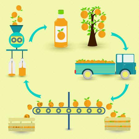 Pasos de producción de jugo de naranja. Naranjo, cosecha, transporte, separación de naranjas sanas y podridas, procesado en fábrica y embotellado. En un esquema circular.