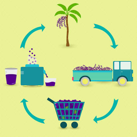 Acai juice production steps. Acai tree, harvest, transport, sale at the grocery store, production of acai juice at home. In a circular scheme.
