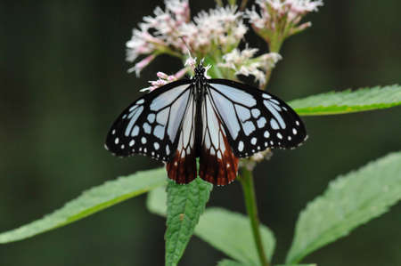 Butterflies are symbols of transmutation, rebirth, renewal, freedom, and beauty.