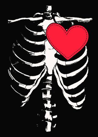 Human bone rib Vector