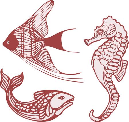 Sea fish seahorse Vector