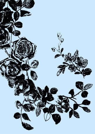 rose drawing Illustration