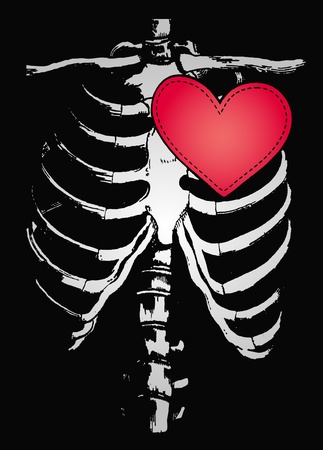 bone illustration Vector