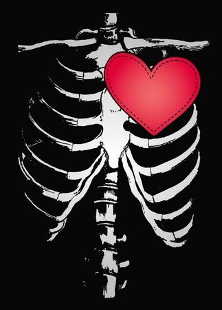 bone illustration