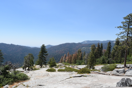 Sequoia Beetle Rock