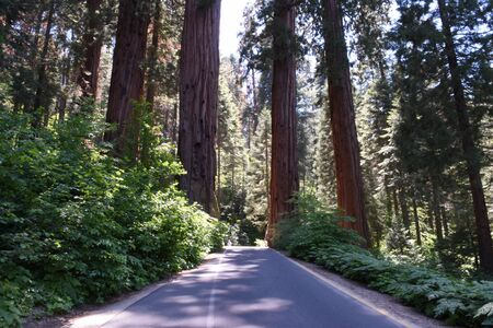 Sequoia Giant Forest Road
