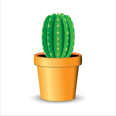Cactus  Vector Illustration