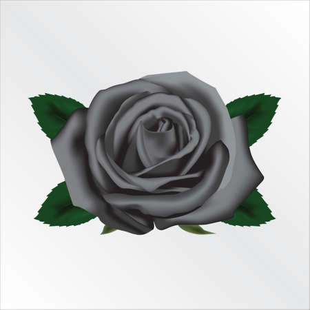 Black Rose Vettoriali