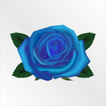 Blue Rose Vettoriali