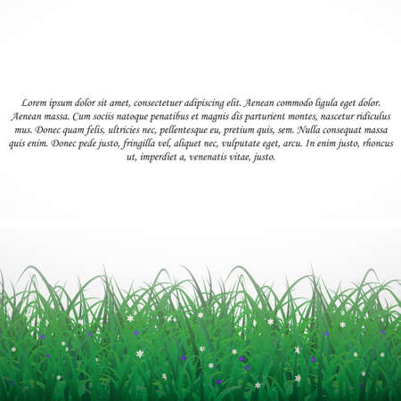 Grass on a white shining background with flowers. With text