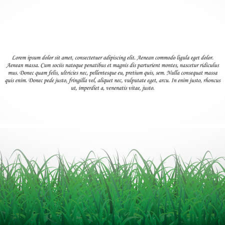 Grass on a white shining background. With text