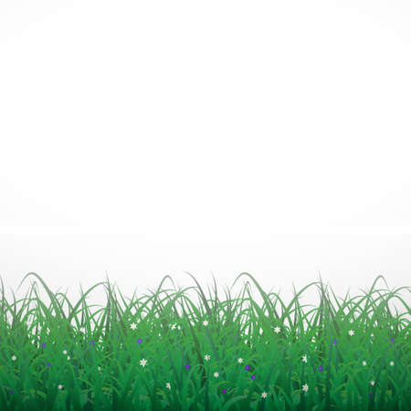Grass on a white shining background with flowers