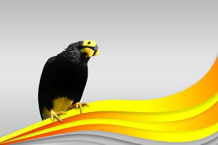 bird on the orange tape