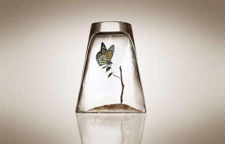 유리에 나비와 나무