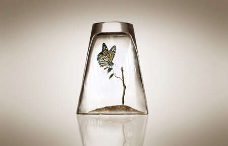 butterfly and tree in the glass