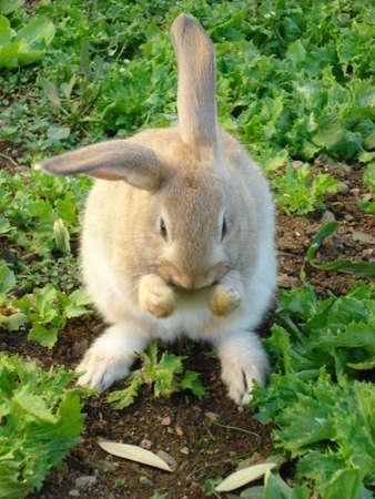 Bunny rabbit sitting outside in garden
