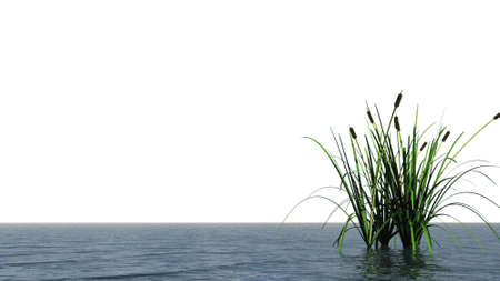 marsh plant: isolated water landscape and reed - 3d illustration