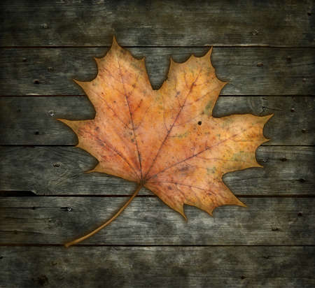 maple leaf on wooden background