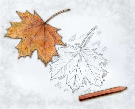 maple leaf and pencil on paper with sketch Stock Photo