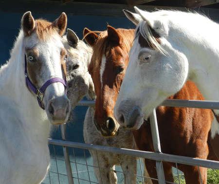 Paarden vergadering Stockfoto