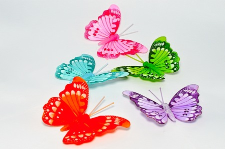 colourfully: five of butterfly