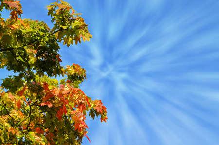 fx: Autumn tree against blue sky, FX effect