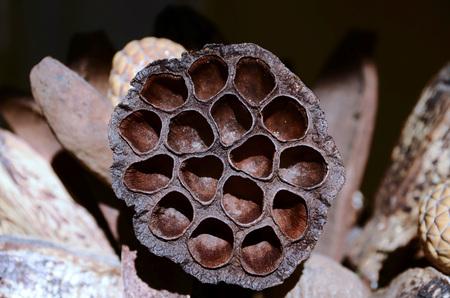 Flower Seed Pod