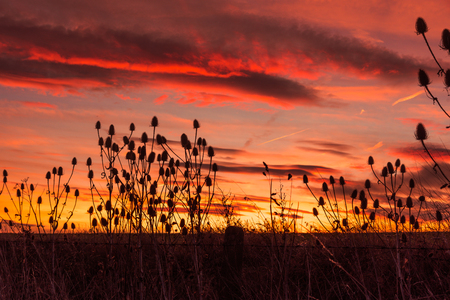 Photos of sunset with plants in the foreground, red yellow colors Stock Photo