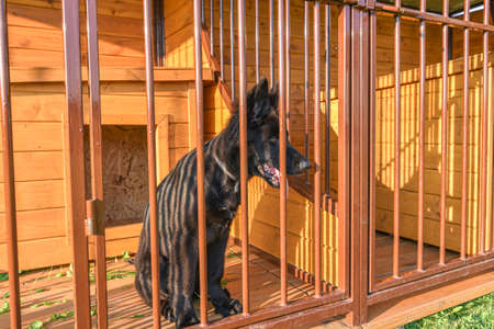 Cute black dog behind fence in the cage Stock Photo