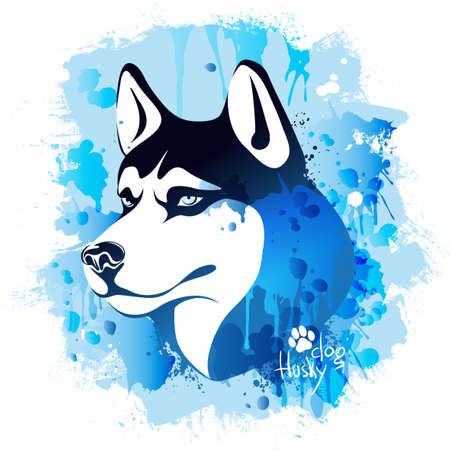 vector illustration, watercolor drawing of a head of a dog of the breed of a husky on a colored background