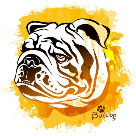 Vektorillustration, Aquarellzeichnung eines Kopfes eines Hundes der Rasse einer englischen Bulldogge auf einem farbigen Hintergrund