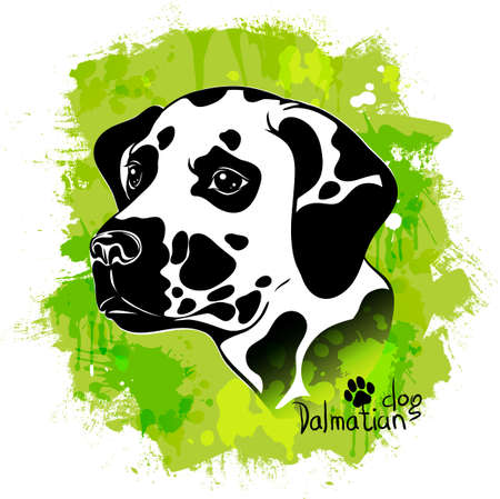 vector illustration, watercolor drawing of a head of a dog of the breed of a Dalmatian breed on a colored background Ilustração