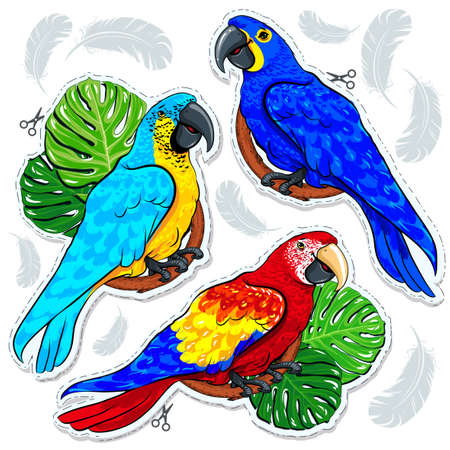 Vector illustration sketch, of comic style colorful icons, set bright colored parrots on palm leaves and feathers background Ilustração