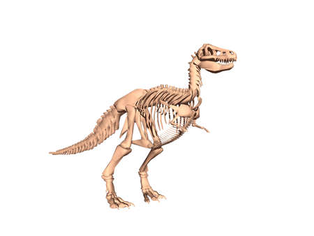 Skeleton of a dangerous dinosaur