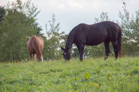 brown riding horse on pasture
