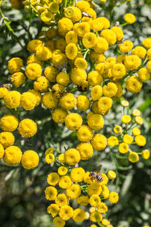 poisonous scab herb with bee