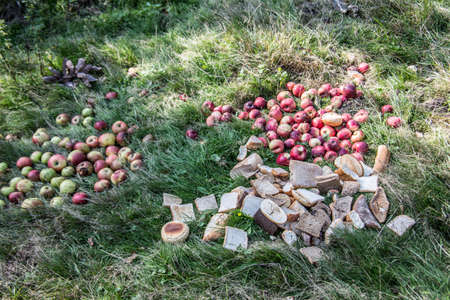 Apples and bread as a feeding place for game Фото со стока