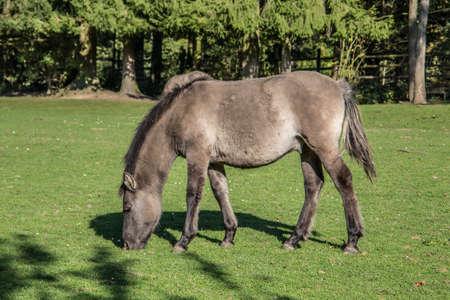 brown wild horses on pasture