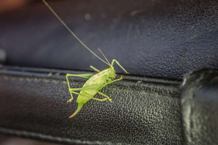 green hay horse with long legs and antennas