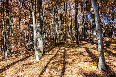 red brown autumn forest with deciduous trees