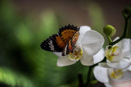 tropical butterfly on orchid Zdjęcie Seryjne
