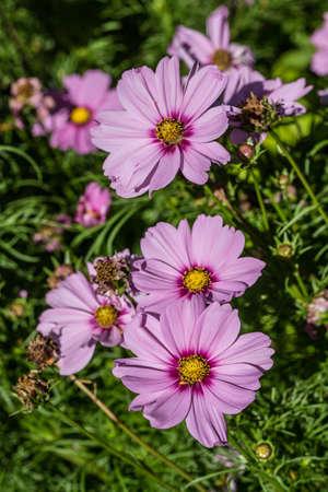 blooming flower arrangement in the flower bed Standard-Bild